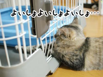 cat1232