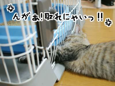 cat1233