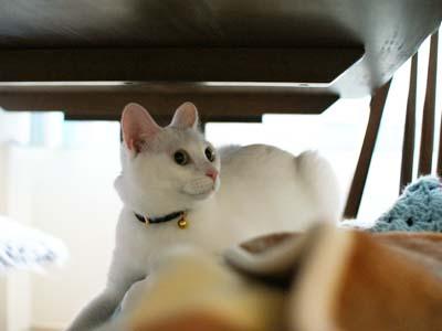 cat1238