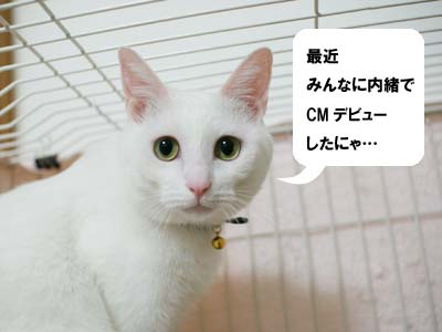 cat1247
