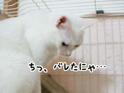 cat1252