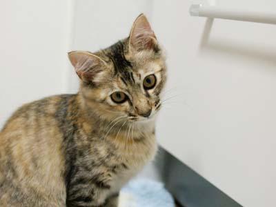 cat1253