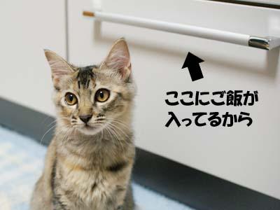 cat1254