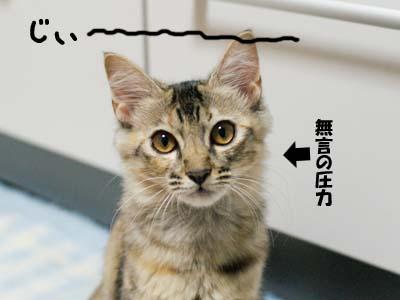 cat1255
