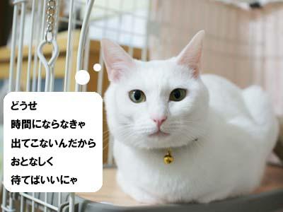 cat1256
