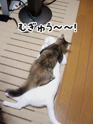 cat1257
