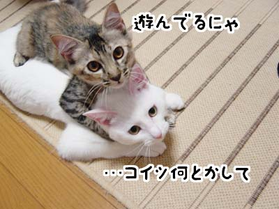 cat1258
