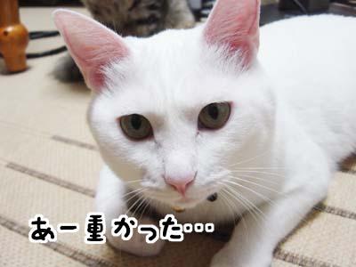 cat1259