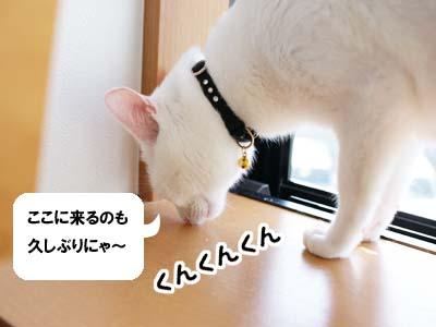 cat1260