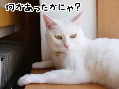 cat1262