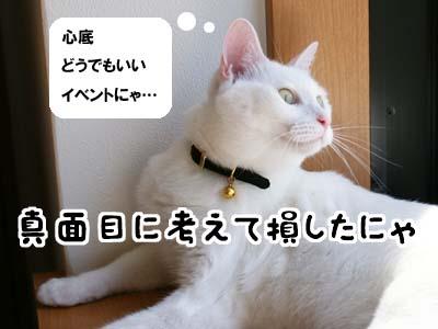 cat1263