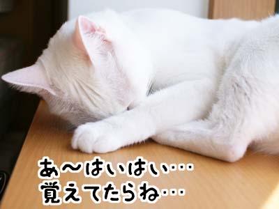cat1264