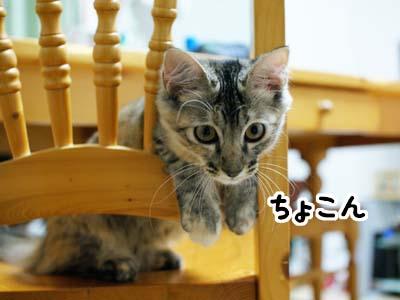 cat1265