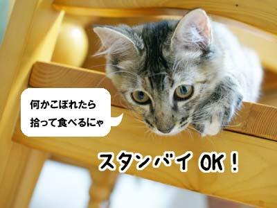 cat1266