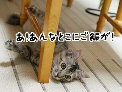 cat1267