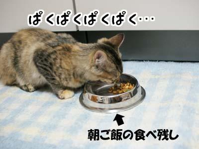 cat1268
