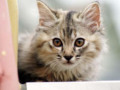 cat1271