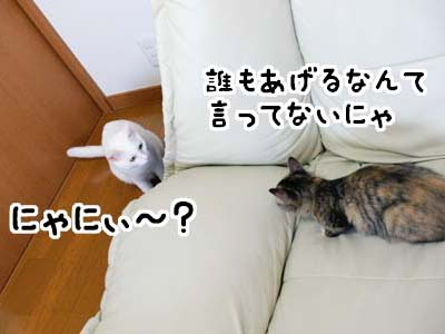 cat1275