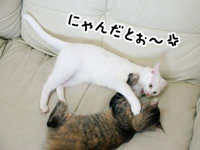 cat1277