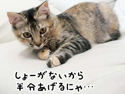 cat1279
