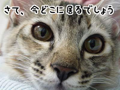 cat1280