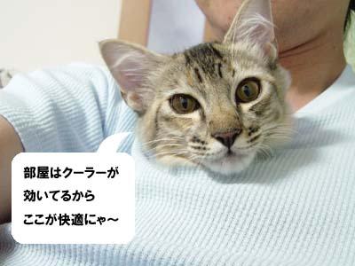 cat1282