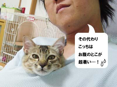 cat1283