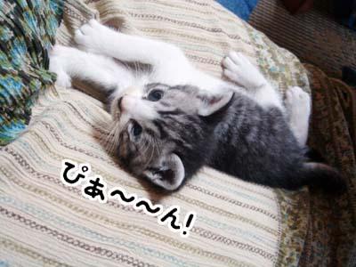 cat1284