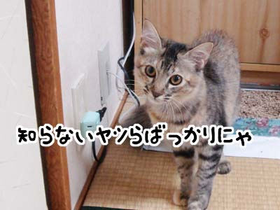 cat1286
