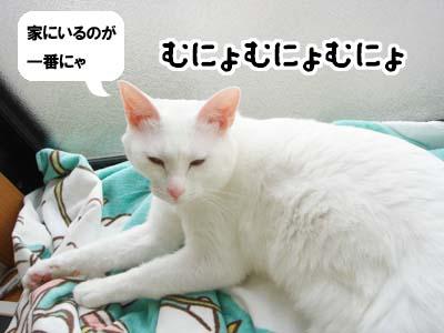 cat1287