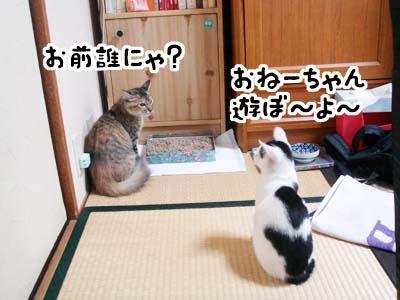 cat1288