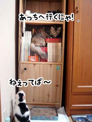 cat1289