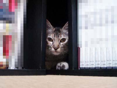 cat1290