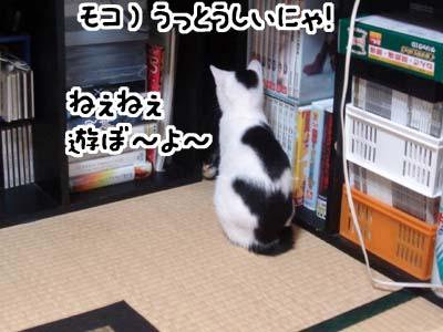 cat1291