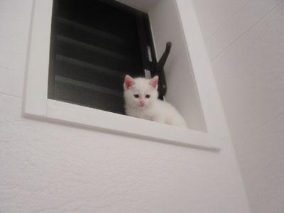 cat978