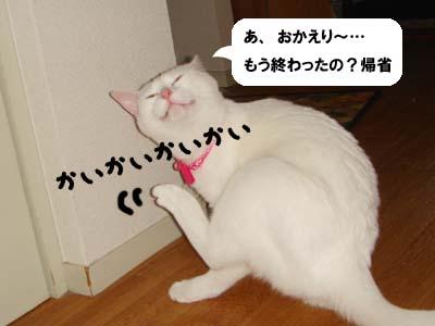 cat310