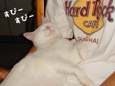 cat311