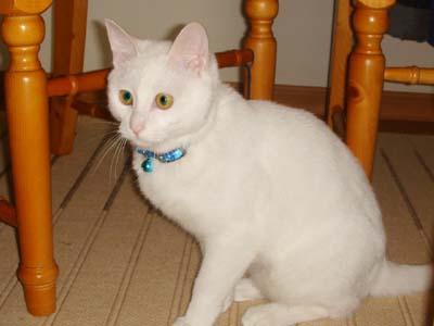 cat313