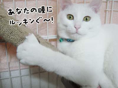 cat318