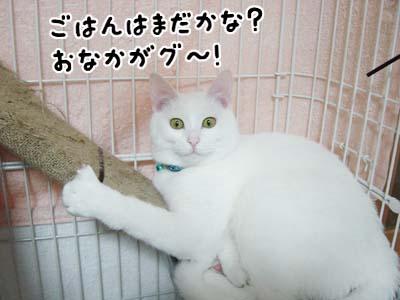 cat319