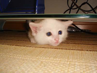 cat32