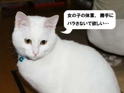 cat321