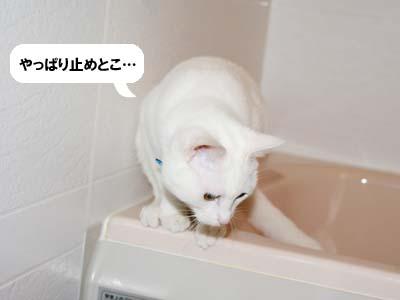 cat329