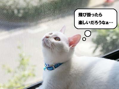 cat338