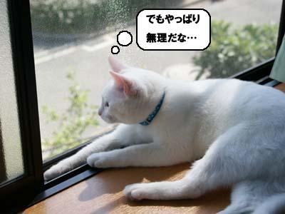 cat339