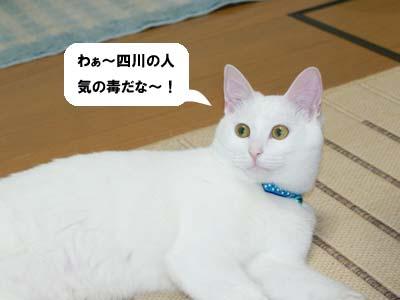 cat343