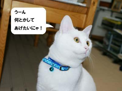 cat344