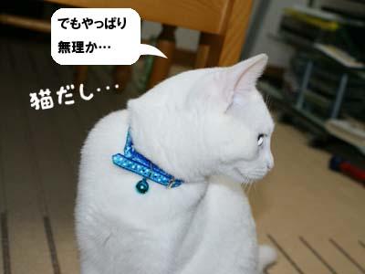 cat345