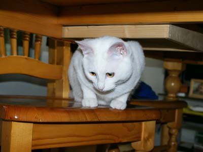 cat346