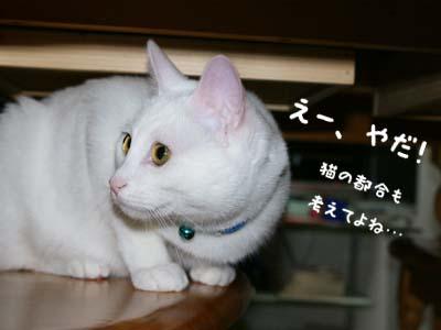 cat347